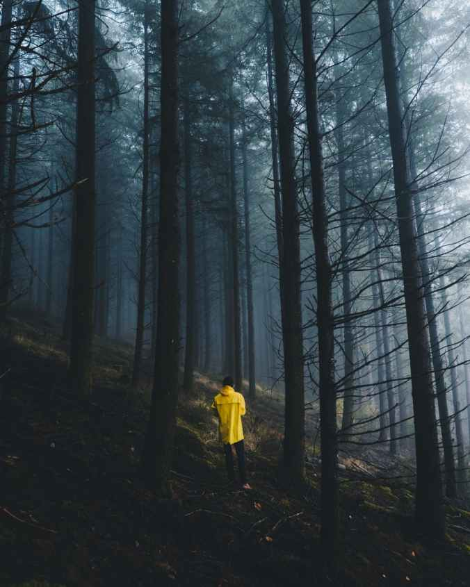 back view photo of person wearing yellow hoodie walking in the forest