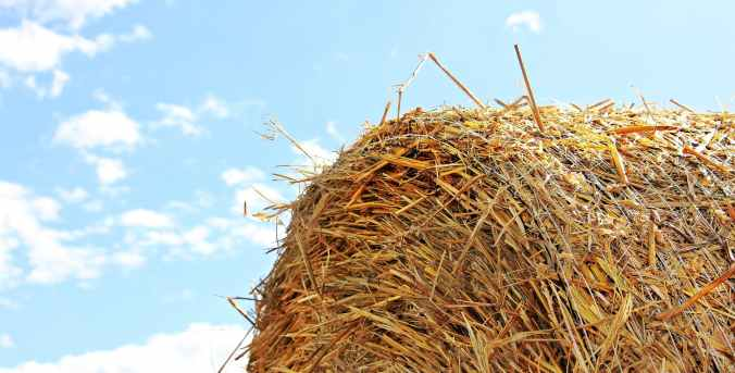 close up photo of hay