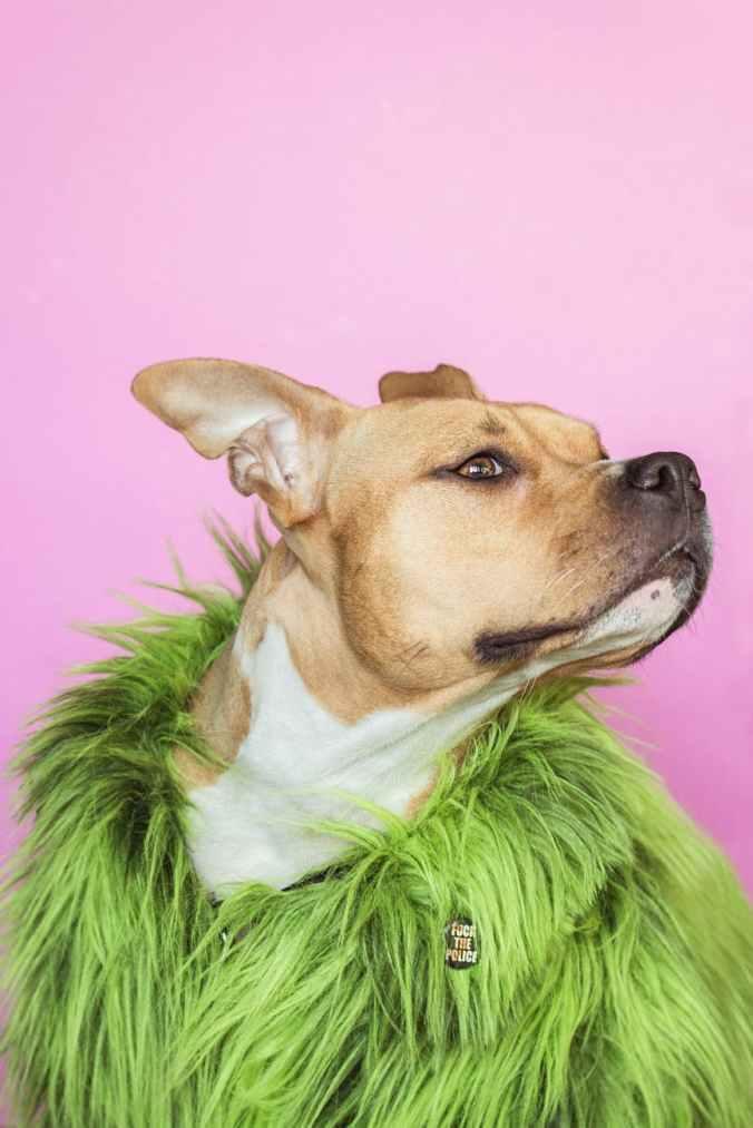 dog wearing green fur coat