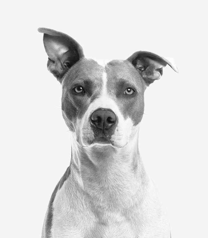 closeup photo of short coated white and gray dog
